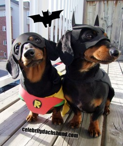 Batdog and Robin