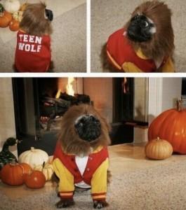 Teen Wolf Pug